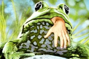 Frogs film complet