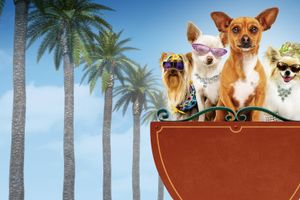 Le Chihuahua de Beverly Hills film complet