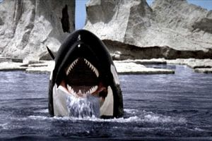 Orca film complet